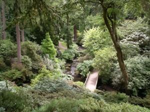 Woodland_garden_Bodnant